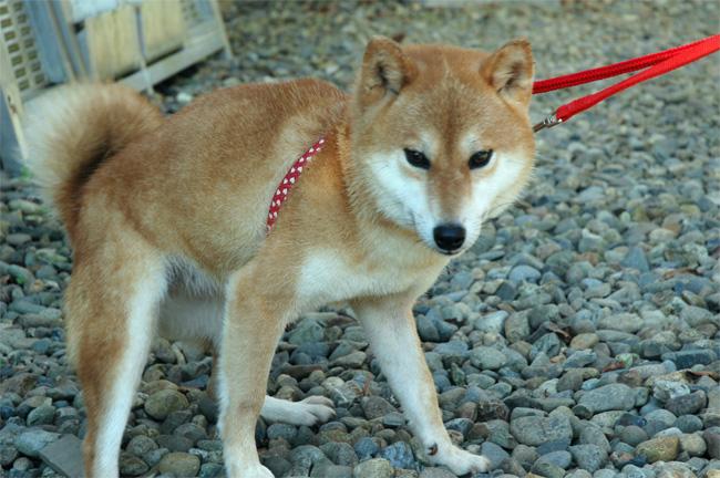 千葉県動物愛護センター_e0135972_193711.jpg