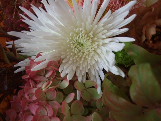 オークリーフ(秋色ミナズキとアナスタシアの花束)_f0049672_1672725.jpg