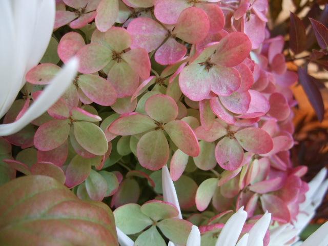 オークリーフ(秋色ミナズキとアナスタシアの花束)_f0049672_1684482.jpg