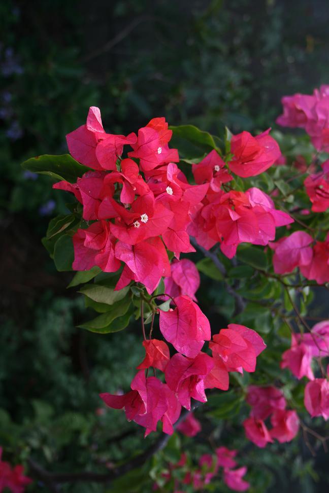 花のたましい         金子みすずを想う_a0107574_8391682.jpg