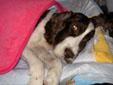 愛犬の旅立ち。。。。_f0039487_1534569.jpg