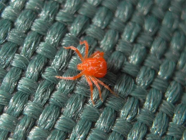 真っ赤な色をしていて体にも足にもトゲがたくさんあります_b0025008_1525115.jpg