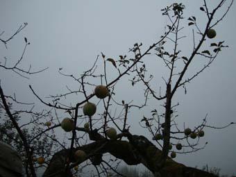 佐々木さんのリンゴ畑_c0125114_23523279.jpg