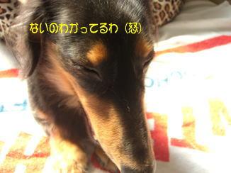 c0058727_11503889.jpg