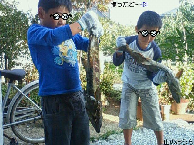 f0085327_20374672.jpg