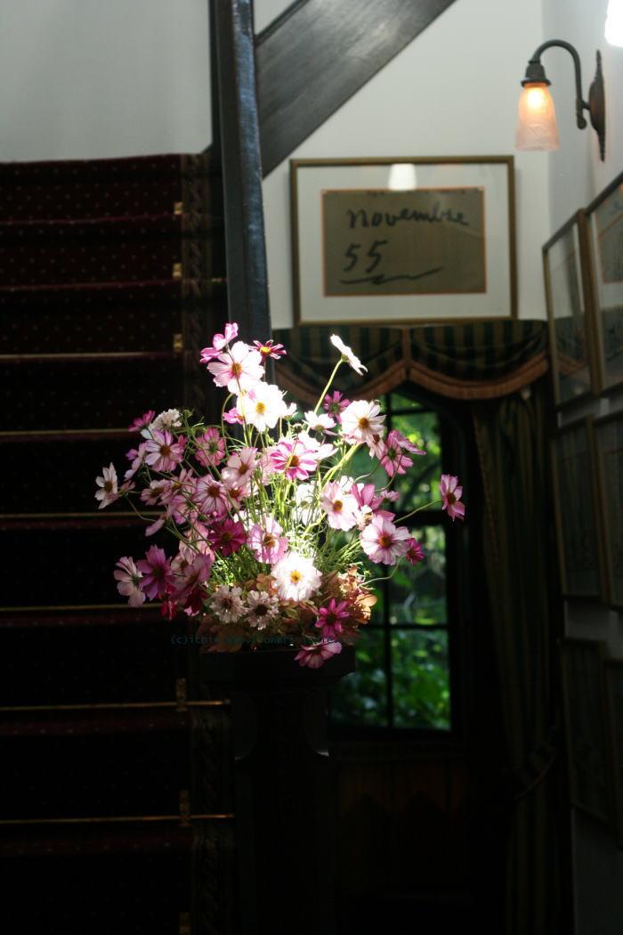シェ松尾松濤レストラン様の装花 コスモス_a0042928_19242542.jpg