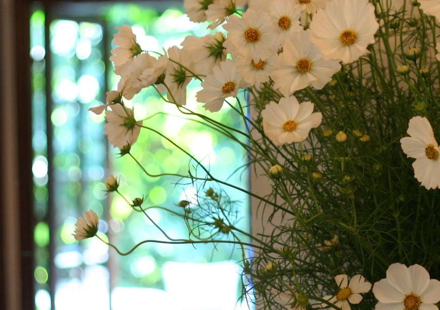 シェ松尾松濤レストラン様の装花 コスモス_a0042928_2012858.jpg