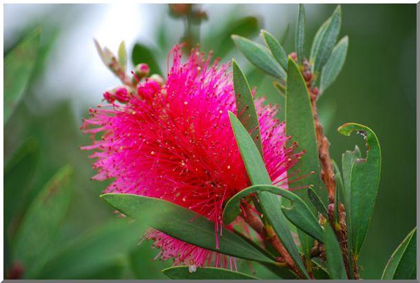 変った・お花です_d0123528_1056446.jpg