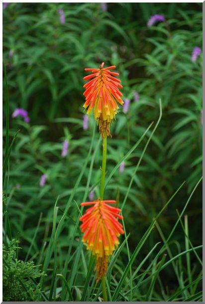 変った・お花です_d0123528_11111081.jpg