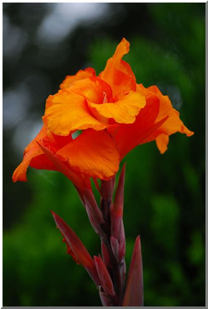 変った・お花です_d0123528_11171945.jpg