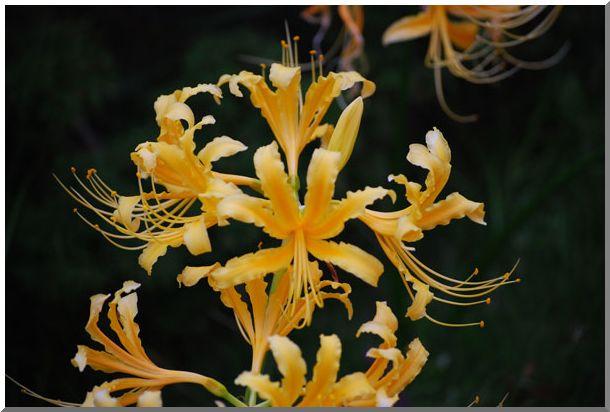 変った・お花です_d0123528_1161862.jpg