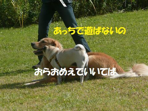 f0114128_21212381.jpg