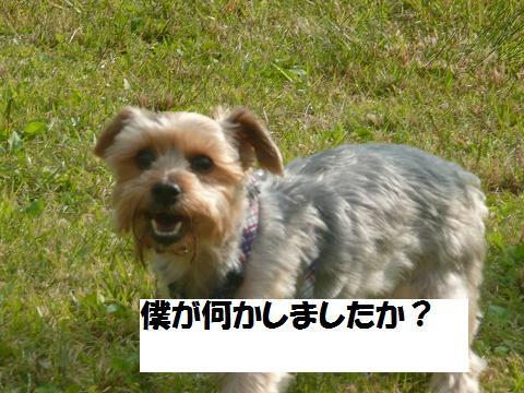 f0114128_2151557.jpg