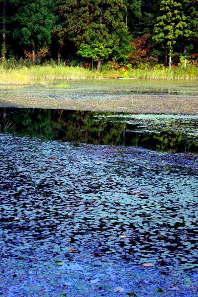 じゅんさい沼、苔沼湿原地帯_c0176838_22361224.jpg