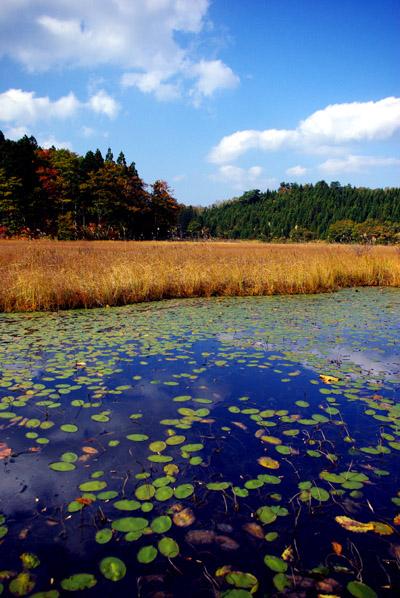 じゅんさい沼、苔沼湿原地帯_c0176838_2241621.jpg