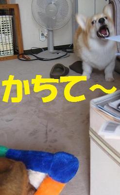 f0087143_20102093.jpg