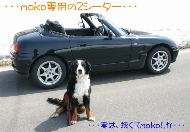 f0194048_815660.jpg