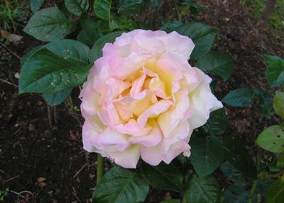 秋のおすすめ薔薇園_a0094959_10105165.jpg
