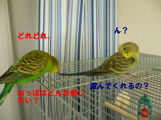 f0196665_1920472.jpg