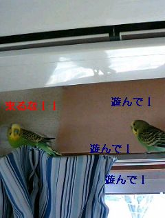 f0196665_19342837.jpg
