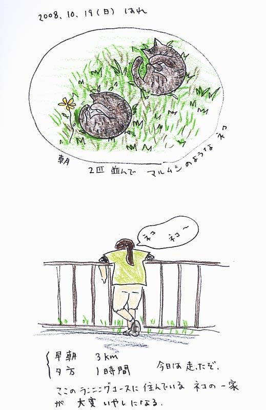10/19(日)マルムシネコ_f0072976_2195218.jpg