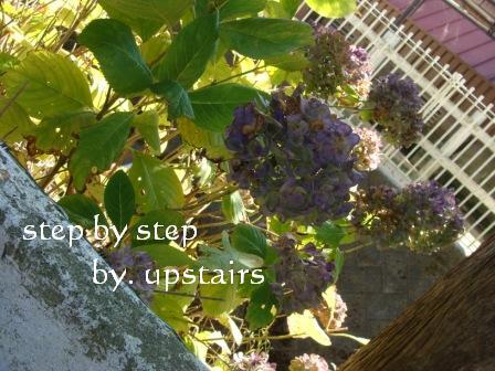 f0175413_2118369.jpg