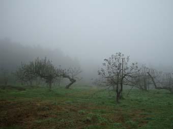 佐々木さんのリンゴ畑_c0125114_23493591.jpg