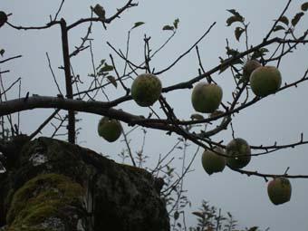 佐々木さんのリンゴ畑_c0125114_23512175.jpg