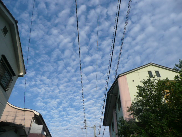 秋の空♪_f0099147_19335054.jpg