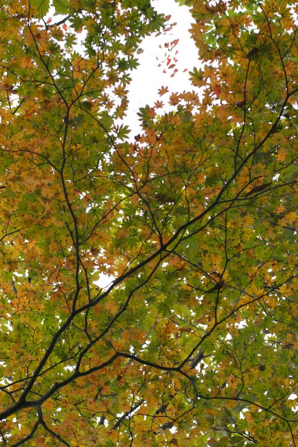紅葉もとめて奥武蔵_d0123171_7541220.jpg