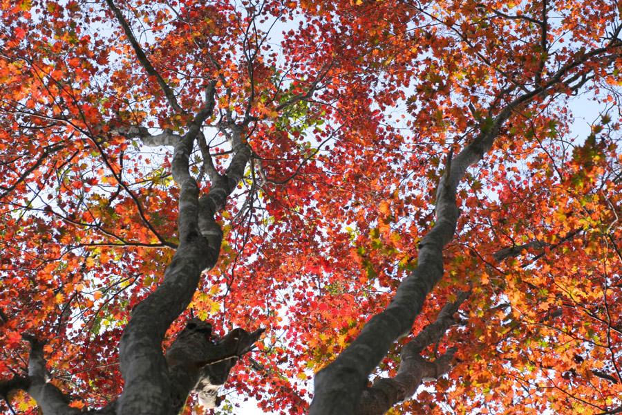 紅葉もとめて奥武蔵_d0123171_7574218.jpg