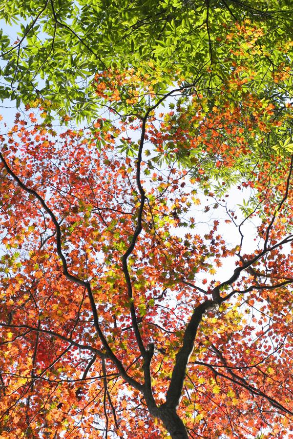 紅葉もとめて奥武蔵_d0123171_821441.jpg