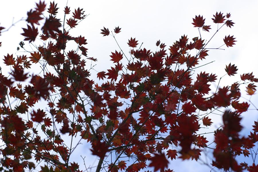 紅葉もとめて奥武蔵_d0123171_824364.jpg