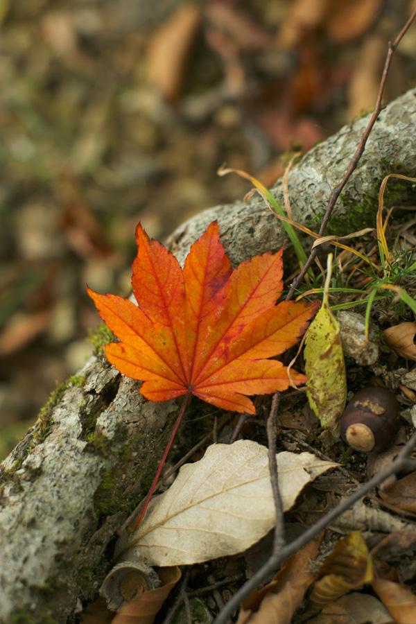 紅葉もとめて奥武蔵_d0123171_825847.jpg