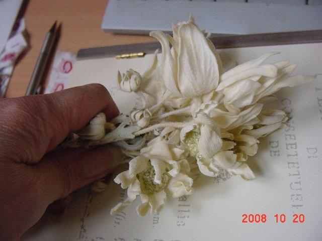 f0183773_2155198.jpg