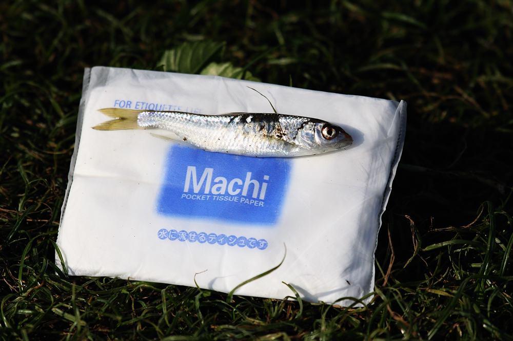 カワセミ巨大魚をGET/ドクターイエロー_b0024798_5363359.jpg