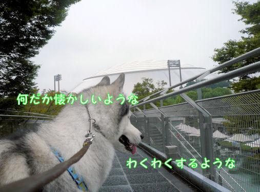 f0112407_1046753.jpg