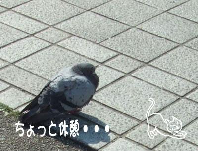 b0138922_18123299.jpg