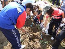 秋の「芋ほり大会」開催_b0062527_1555272.jpg