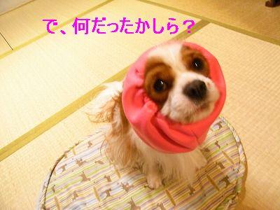 d0113561_001536.jpg