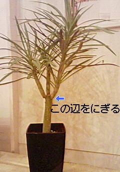 今日の植物_e0149863_2021464.jpg
