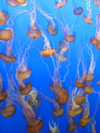 モントレー水族館へ_c0119197_13303023.jpg