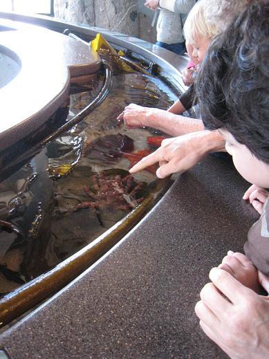 モントレー水族館へ_c0119197_13304378.jpg
