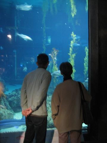 モントレー水族館へ_c0119197_1332714.jpg