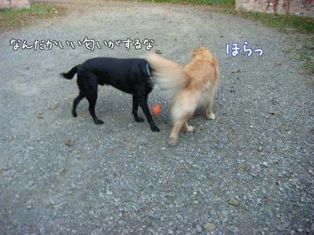 好き好き好き_f0064906_17562016.jpg