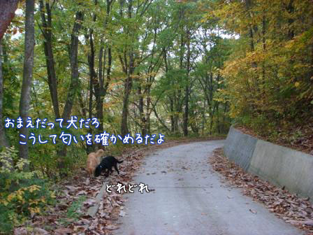 好き好き好き_f0064906_18142459.jpg