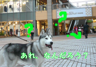 f0112407_13163041.jpg