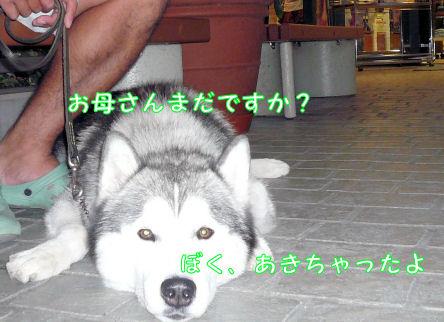 f0112407_13173693.jpg