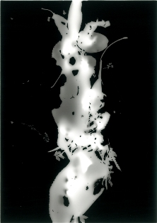 展覧会■11/13-18群葉:foliage from omotesando (横山純子/ YOKOYAMA Sumiko)【写真】_e0091712_3191145.jpg