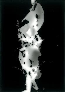 展覧会■11/13-18群葉:foliage from omotesando (横山純子/ YOKOYAMA Sumiko)【写真】_e0091712_3193320.jpg